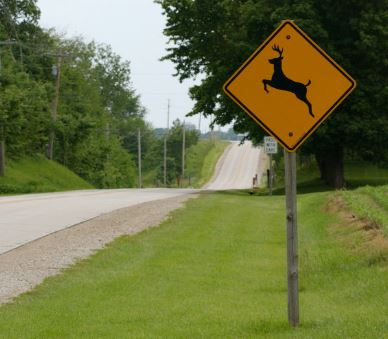 Be alert for deer when driving the remote parts of Gwinnett County.